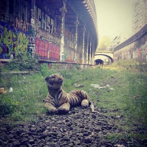 tigreSDF_LeaP_960x960